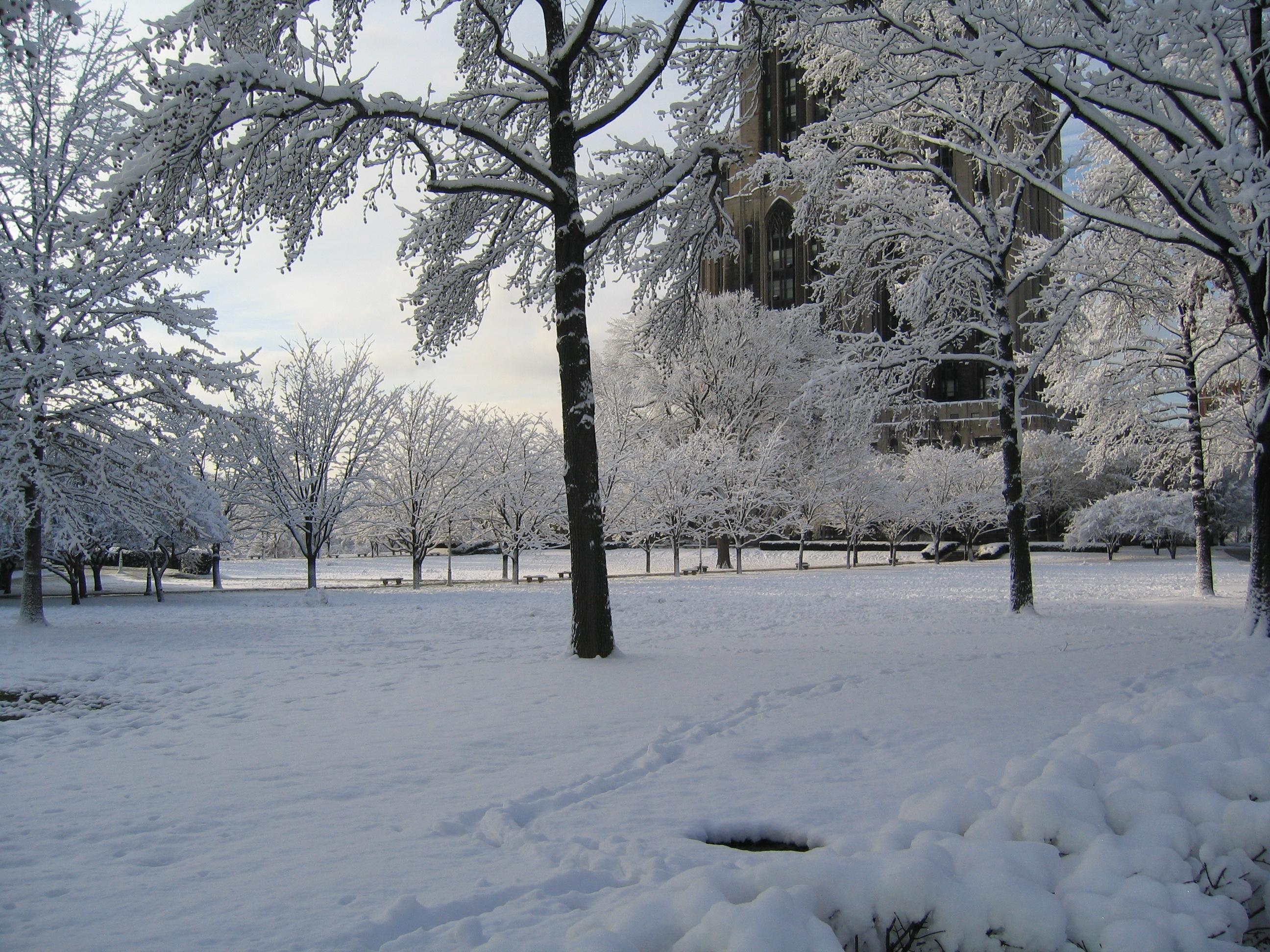 Winter-newsletter-cover